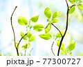 新緑 エコ 77300727