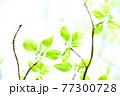 新緑 エコ 77300728