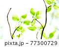 新緑 エコ 77300729