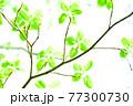 新緑 エコ 77300730