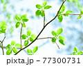 新緑 エコ 77300731