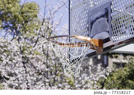 青空を背景に桜の花とバスケットゴール 77318217