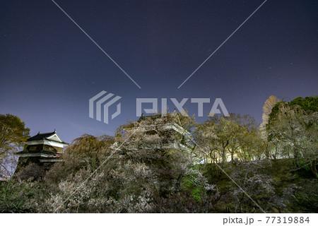 長野県上田市 上田城の桜ライトアップ 77319884