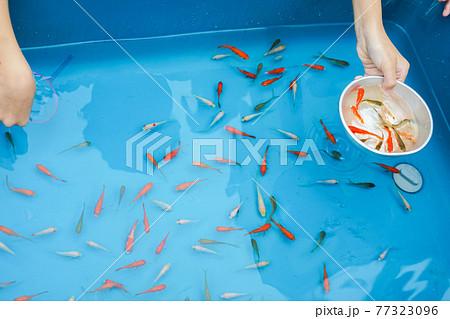 夏祭りの金魚すくいのイメージ 77323096