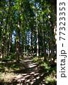 静かな森の小道 77323353
