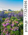 西寒田神社の藤 77324696