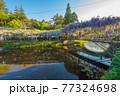 西寒田神社の藤 77324698