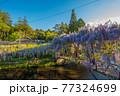 西寒田神社の藤 77324699