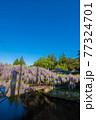 西寒田神社の藤 77324701