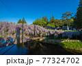 西寒田神社の藤 77324702