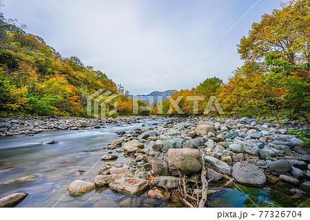 秋の奥只見湖の支流にて 77326704