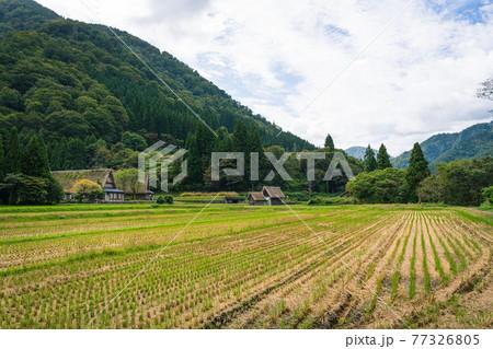 世界遺産五箇山菅沼集落の合掌造り 77326805