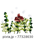 金魚・蓮・藻・渦 77328630