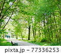 【ドイツ】フランクフルト 公園 散歩道 77336253