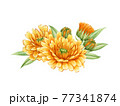 Calendula flower arrangement. Watercolor illustration. Yelow medical natural herb. Calendula officinalis plant on white background. Natural healthy blossom with orange petals and green leaves 77341874