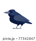 Crow raven bird. Black bird Cartoon flat style beautiful character of ornithology, vector illustration isolated on white background 77342847