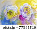 White roses, Artistic sketch etude. Wet painting 77348519