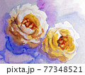 White roses, Artistic sketch etude. Wet painting 77348521
