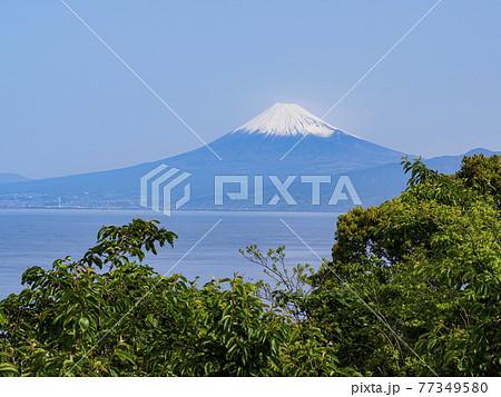 伊豆半島西伊豆絡みた富士山 77349580
