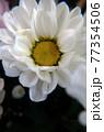 花 白い花 アップ 77354506