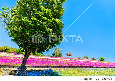 群馬県太田市 八王子山公園(見晴らしの丘) 77360754