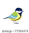 Great tit is a passerine bird in the tit family Paridae. Titmouse bird Cartoon flat style beautiful character of ornithology, vector illustration isolated on white background 77363474