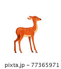 Roe deer isolated on white background. Side view. Cartoon vector flat style illustration 77365971