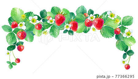 イチゴのアーチ型フレーム。水彩イラスト。中サイズ。 77366295