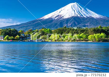 《山梨県》初夏の富士山・河口湖湖畔の眺め 77370232