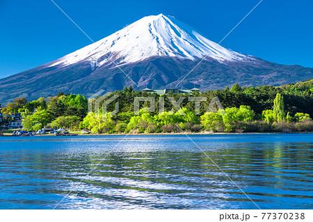 《山梨県》初夏の富士山・河口湖湖畔の眺め 77370238
