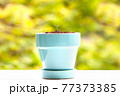 植物 芽 植木鉢 77373385
