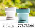 植物 芽 植木鉢 77373390