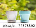 植物 芽 植木鉢 77373392
