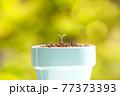 植物 芽 植木鉢 77373393