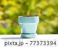 植物 芽 植木鉢 77373394