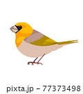 Rarest Birds in the World. Palila is a critically endangered finch-billed species of rare Hawaiian honeycreeper. Cartoon flat style beautiful character of ornithology, vector illustration isolated 77373498