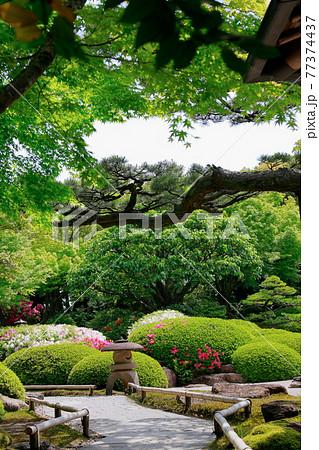 日本庭園の小道 77374437