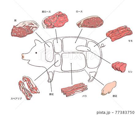 豚肉の部位説明のイラスト-手描きの線画 77383750