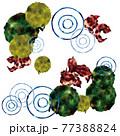 金魚・藻・蓮の葉 77388824