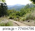 神奈川県立七沢森林公園 おおやま広場 77404796