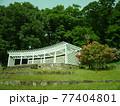 神奈川県立七沢森林公園 シャクナゲ かながわの花の名所100選 77404801