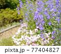 稲城中央公園 花壇 77404827