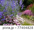 稲城中央公園 花壇 77404828