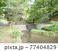 稲城中央公園 池と新緑 77404829