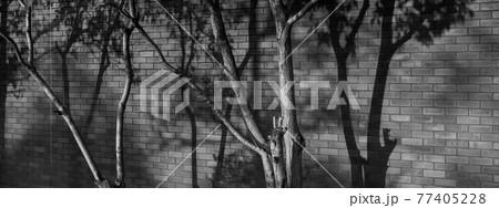 背景素材 煉瓦ブロックに映る木の影 77405228