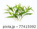 Vietnamese coriander leaves on white background. 77415092