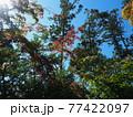 晩夏の京都等持院風景 77422097