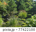 晩夏の京都等持院風景 77422100