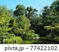 晩夏の京都等持院風景 77422102