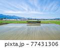 春の水田がある風景 77431306
